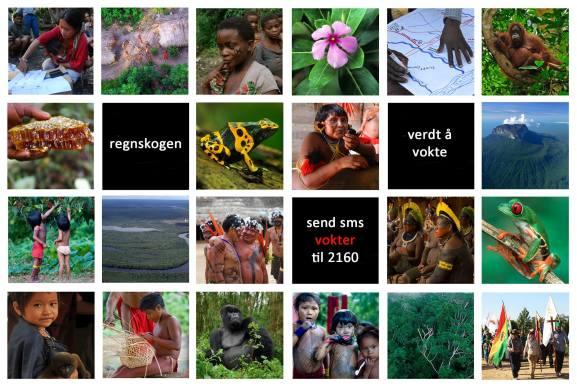 regnskogbeboere
