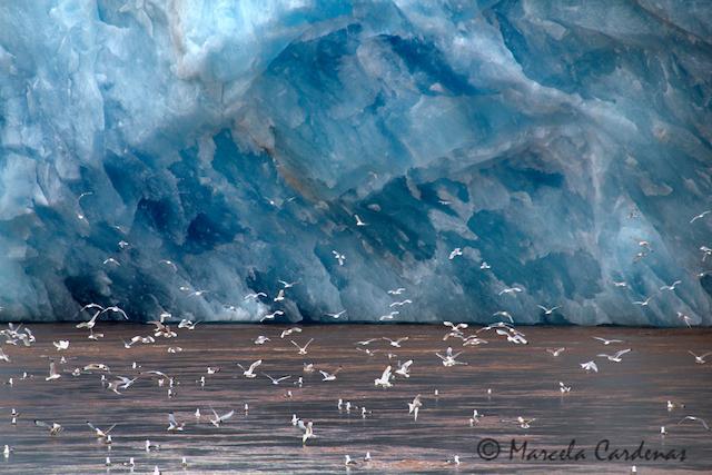 Marcela.Svalbard.Iceberg and Seagulls.026-SRGB